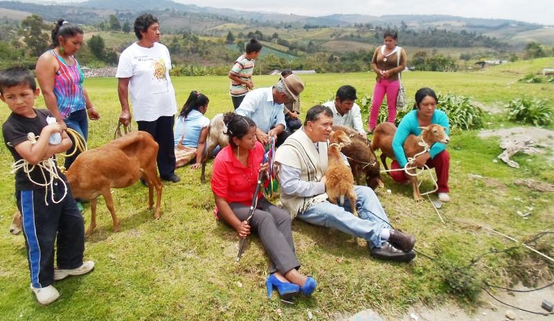 Para superar el déficit de proteínas en la población, la ESE Popayán adelanta proyectos productivos con las comunidades. En Caldono se ejecuta el programa de cría de cuyes y conejos; en Paniquitá de chivos y cabras.