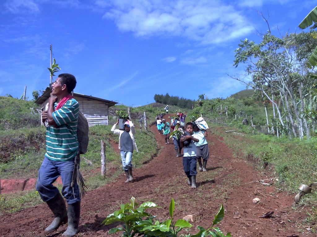 Indígenas que se separaron del CRIC y de la ACIN, se volvieron empresarios y sembraron para los jóvenes de su comunidad en Santander de Quilichao, varias hectáreas de café para que ellos continúen produciendo y se alejen de los cultivos ilícitos y de la manipulación de la dirigencia indígena.