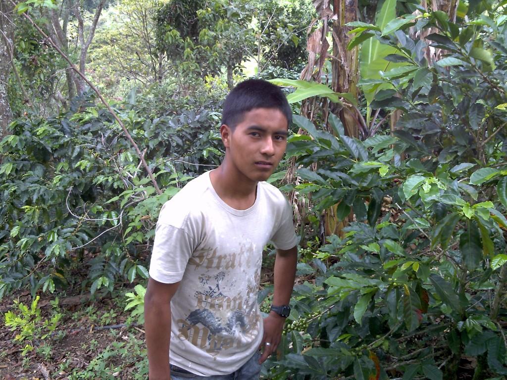 Los jóvenes indígenas tienen en el café un proyecto de vida y de independencia del CRIC y de la ACIN.