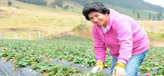 La mujer representan cerca del 45% de la población rural de Colombia.