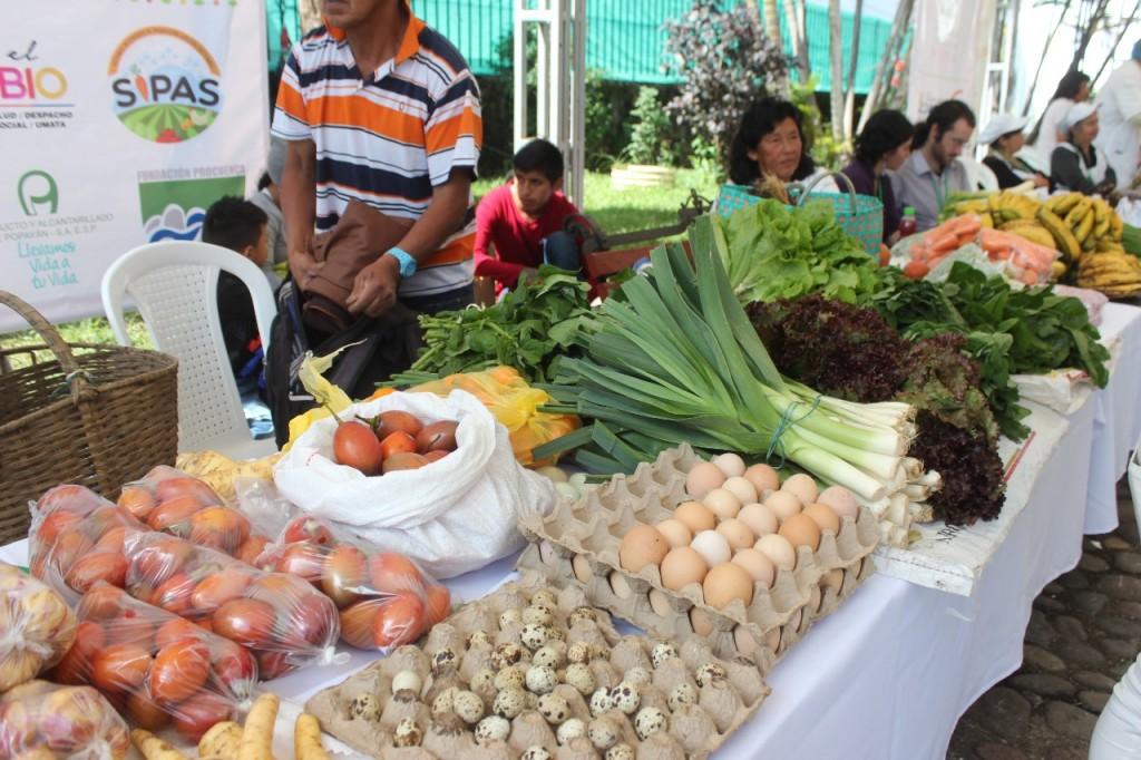 Familias de zonas rurales de Popayán, hacen parte del programa de Sistemas Integrados de Producción Agraria Sostenible 'SIPAS'.